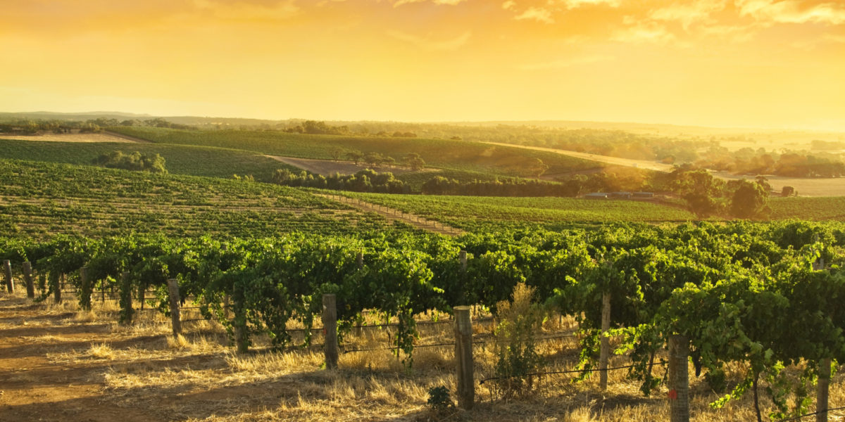 Barossa Food Amp Wine Experience Adelaide Sightseeing Tours